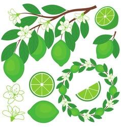 Lime Set vector image