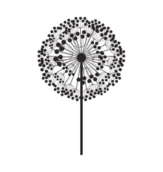 silhouette dandelion with stem and pistil vector image vector image