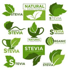 Stevia sweetener sugar substitute healthy vector