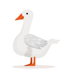 White domestic goose poultry breeding vector