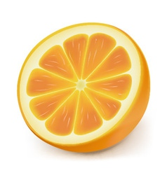 Photorealistic orange slice vector