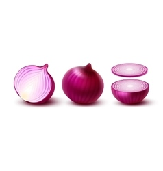 Set of fresh whole and sliced red onion bulbs vector