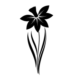 Narcissus flower vector
