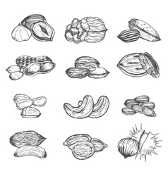 Nuts Set Hand Draw Sketch vector image