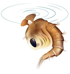Mosquito pupae stage vector