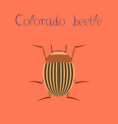 Flat on background colorado beetle vector