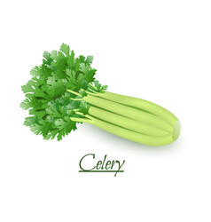 Fresh tasty celery in a realistic style isolated vector