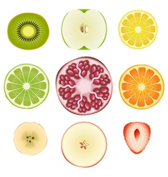 Fruit Slice Set vector image