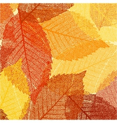 Dry autumn leaves template EPS 8 vector image