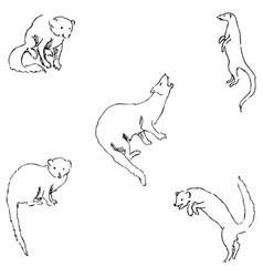 mongoose sketch by hand pencil drawing by hand vector image