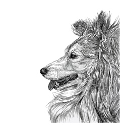 Sketch of Siberian dog vector image