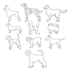 set of cartoon dog breeds vector image vector image