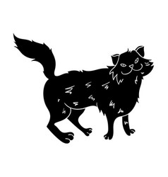 norwegian forest cat icon in black style isolated vector image vector image
