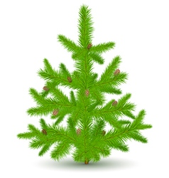 christmas fur-tree vector image