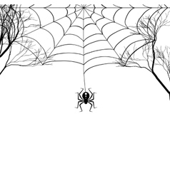 Cobweb between tree branches and a small spider on vector