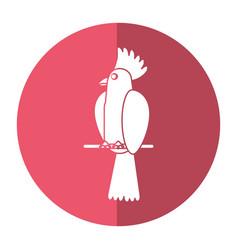 cockatoo bird tropical icon shadow vector image