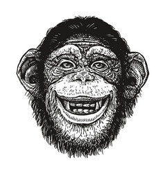 hand drawn portrait of chimpanzee funny monkey vector image vector image