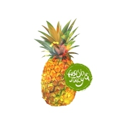 Pineapple fresh organic food vector image