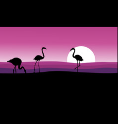 flamingo with pink background scenery vector image vector image