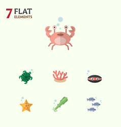 Flat icon marine set of algae scallop cancer and vector