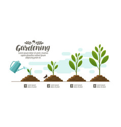 Growing plant gardening horticulture infographic vector
