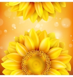 Macro sunflower background eps 10 vector