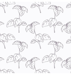 Hand drawn basil branch outline seamless pattern vector