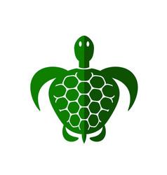 ocean turtle icon vector image