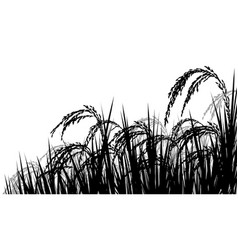 Rice ripe for harvest vector