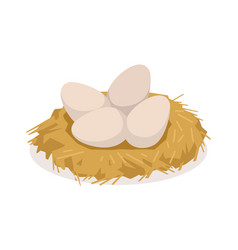 chicken eggs in the nest poultry breeding vector image