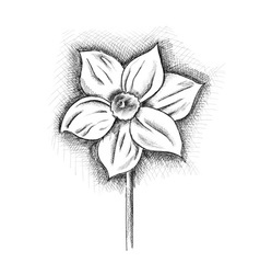 Daffodil isolated on the white vector