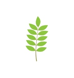 Branch with green leaves vector