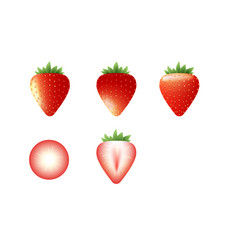 set of realistic sliced and infact strawberry vector image
