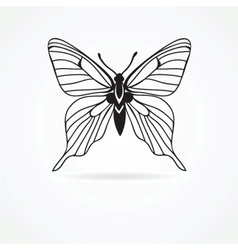 butterfly isolated on white background vector image vector image