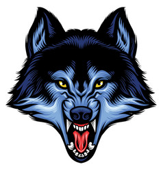 angry wolf head show his sharp teeth vector image