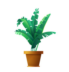 Banana palm leaves botanical exotic tropical vector