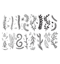 hand drawn decorative branches with leaves and vector image vector image