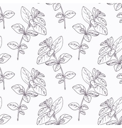 Hand drawn oregano branch outline seamless pattern vector image