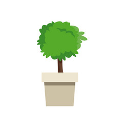 Plant pot tree natural decoration vector