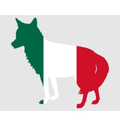 Coyote mexico vector