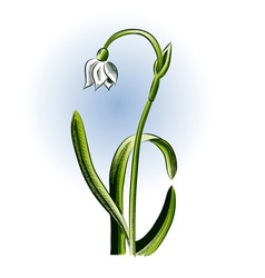 small flower on the white background vector image vector image