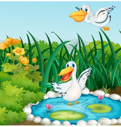 A pond with ducks vector image