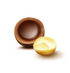 macadamia nut with shell vector image