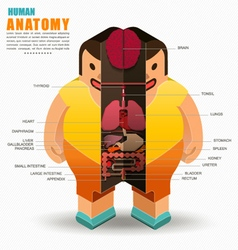 Human body anatomy isometric view and flat style vector