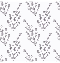 Hand drawn thyme branch outline seamless pattern vector image