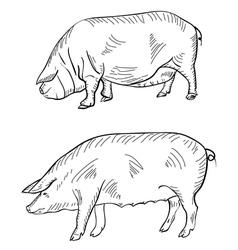 Pig pen drawing vector