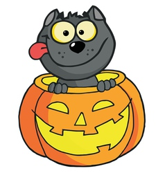 Happy cat in a pumpkin vector