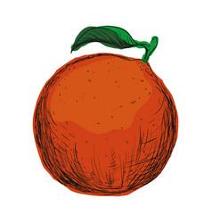 Orange fruit draw vector
