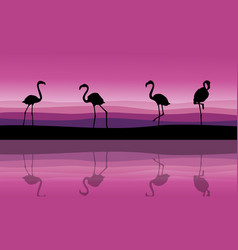 Silhouette of flamingo scenery with reflection vector