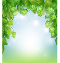 background with hops vector image